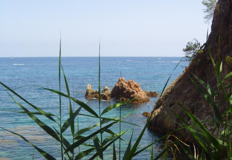 Durch Grashalme sieht man das Meer